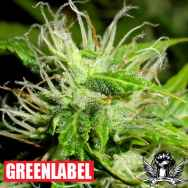 Green Label Seeds White Fruit